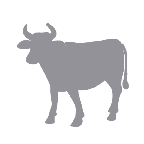 CATTLE WORKING SYSTEMS