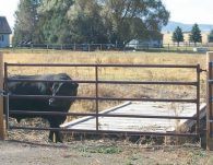 5 bar gate in use with cattle