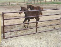 5 bar gate  in use with foals