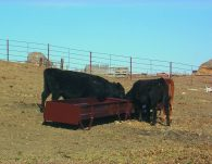 12 ft grain Bunk in use