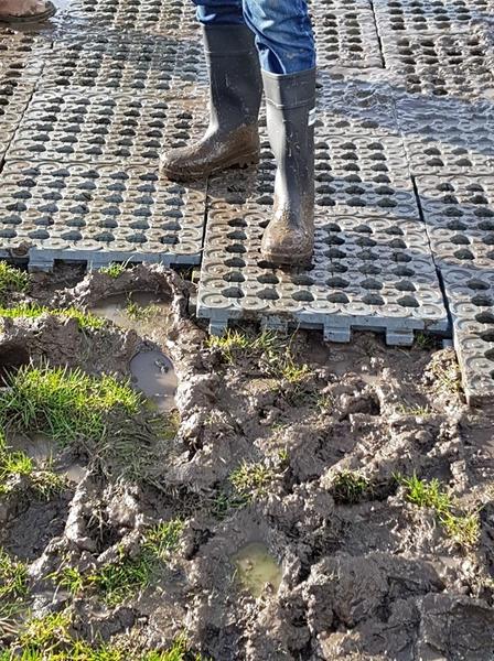 Mud Slabs in a Field